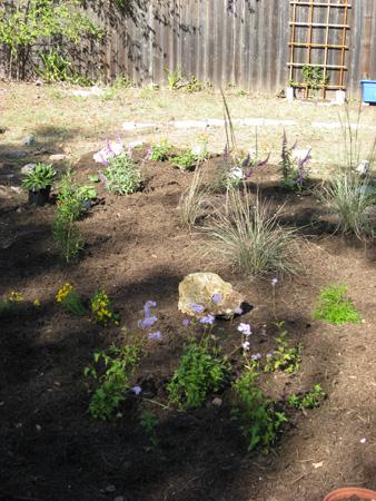 Butterfly garden 12-19-08