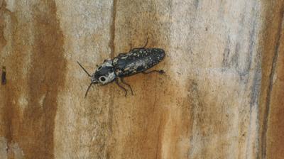 Strange bug in tree stump